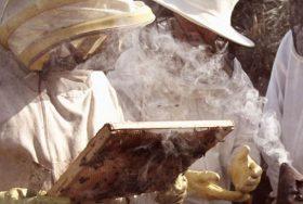 apicultura_25-10-2016